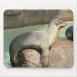 Sea Lion Mouse Pad
