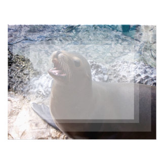 sea lion mouth open photo cute sea animal letterhead