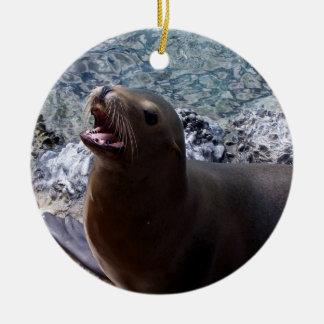 sea lion mouth open photo cute sea animal christmas tree ornament