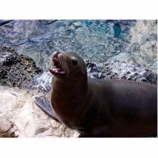 sea lion mouth open photo cute sea animal photo cut out