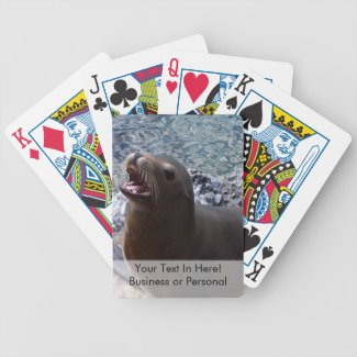 sea lion mouth open photo cute sea animal card decks