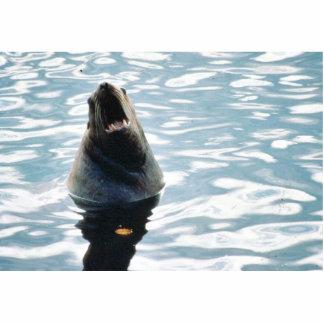 Sea Lion Photo Cut Out
