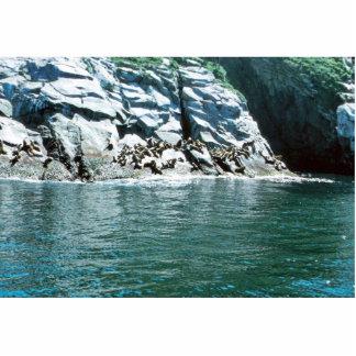 Sea Lion Photo Cut Outs