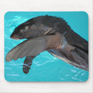 Sea Lion Playing Mouse Pad