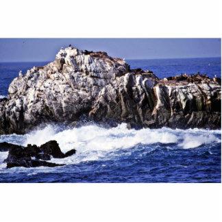 Sea Lion Point - Pt. Lobos State Reserve Cut Out