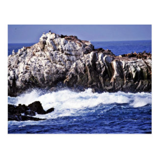 Sea Lion Point - Pt. Lobos State Reserve Postcard