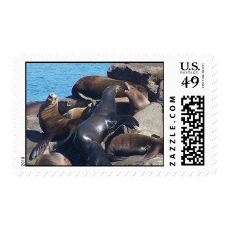 Sea Lion Postage Stamp