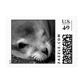 Sea Lion Postage Stamps