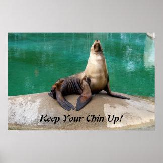 Sea Lion Poster Print