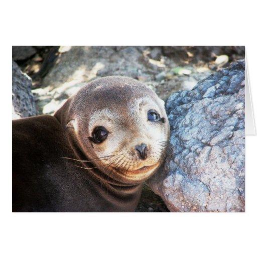 Sea lion pup, Isla Las Plazas, Galapagos Card