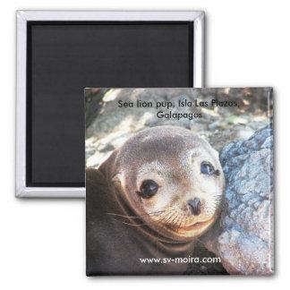 Sea lion pup, Isla Las Plazas, Galapagos Refrigerator Magnets