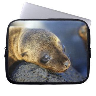 Sea Lion Pup Laptop Laptop Sleeve