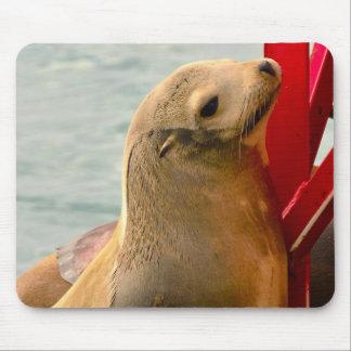 Sea Lion Pup Mouse Pad
