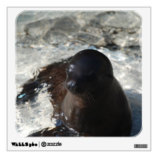 Sea Lion Pup Wall Decals