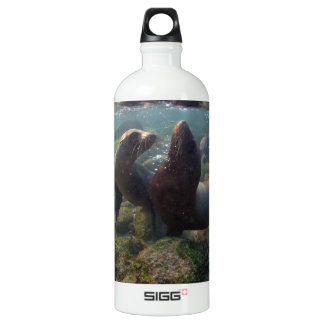 Sea lion pups playing underwater Galapagos Islands Aluminum Water Bottle