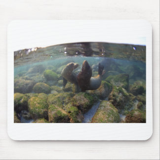 Sea lion pups playing underwater Galapagos Islands Mouse Pad