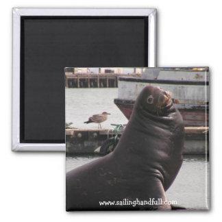 sea lion sailing handfull 2 inch square magnet