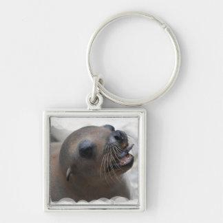 Sea Lion Snacking Key Chain