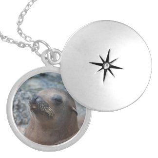 Sea Lion Star Necklaces