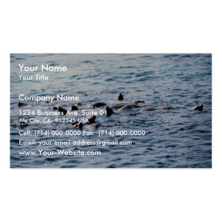 Sea Lion Steller Business Card