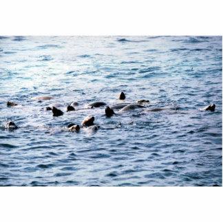 Sea Lion Steller Photo Cutout