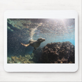 Sea lion underwater playful and curious mouse pad