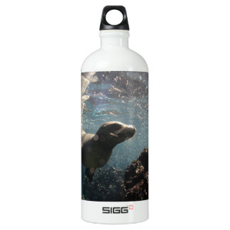 Sea lion underwater playful and curious water bottle