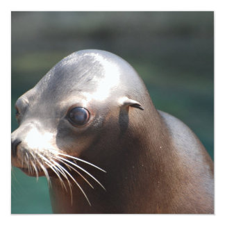 Sea Lion with a Cute Face 5.25x5.25 Square Paper Invitation Card