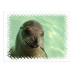 Sea Lion with Fish Postcard