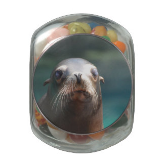 Sea Lion with Whiskers Glass Candy Jar