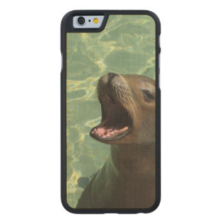 Sea Lion Carved® Maple iPhone 6 Case