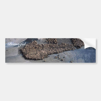 Sea Lions at Haulout - Aerial View Car Bumper Sticker