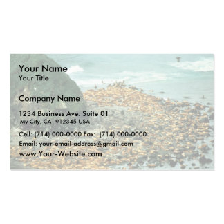 Sea Lions at Haulout Business Card
