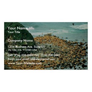 Sea Lions at Haulout Double-Sided Standard Business Cards (Pack Of 100)