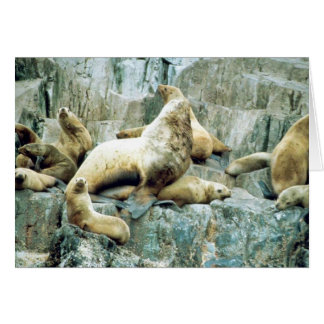 Sea Lions at Haulout Greeting Card
