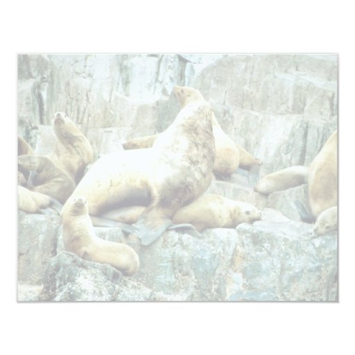 Sea Lions at Haulout 4.25x5.5 Paper Invitation Card