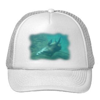 Sea Lions Blurred Edge Hat