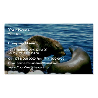 Sea Lions Business Card