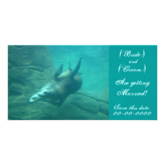 Sea Lions Customizable Save This Date Photo Card Customized Photo Card