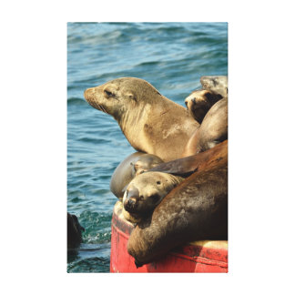 Sea Lions Gallery Wrap Canvas