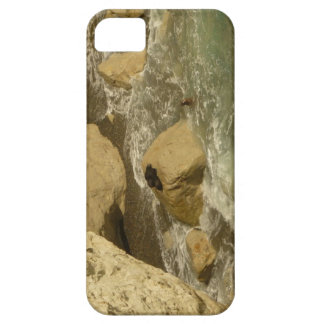 Sea lions in Patagonia iPhone 5 Cover