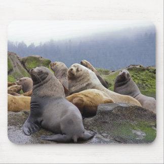 Sea Lions - Mouse pad
