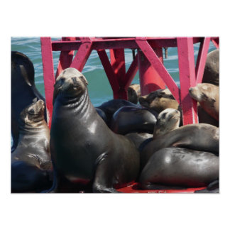 Sea Lions on a Buoy Poster