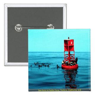 Sea lions on harbor buoy, Ventura, California, U.S Pin