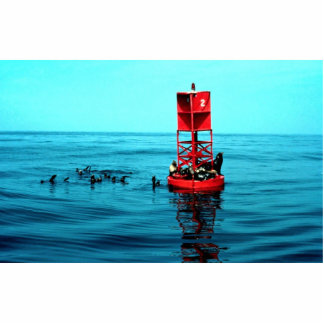 Sea lions on harbor buoy, Ventura, California, U.S Photo Cutout