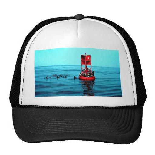Sea lions on harbor buoy, Ventura, California, U.S Trucker Hat
