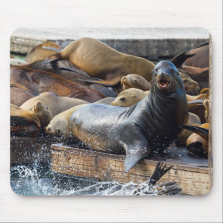 Sea Lions on the Floating Dock in San Francisco Mouse Pad
