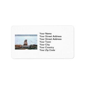 Sea Lions Photo Address Label