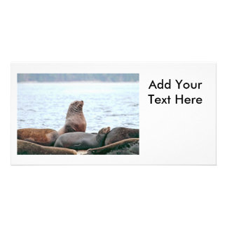 Sea Lions Photo Card