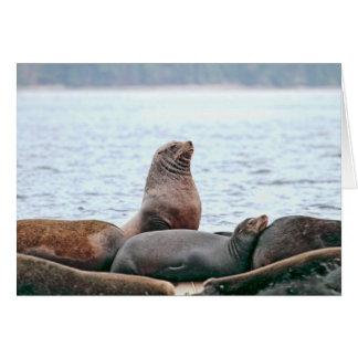 Sea Lions Photo Cards